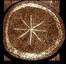 Het logo van de Praktijk voor haptotherapie Helmond